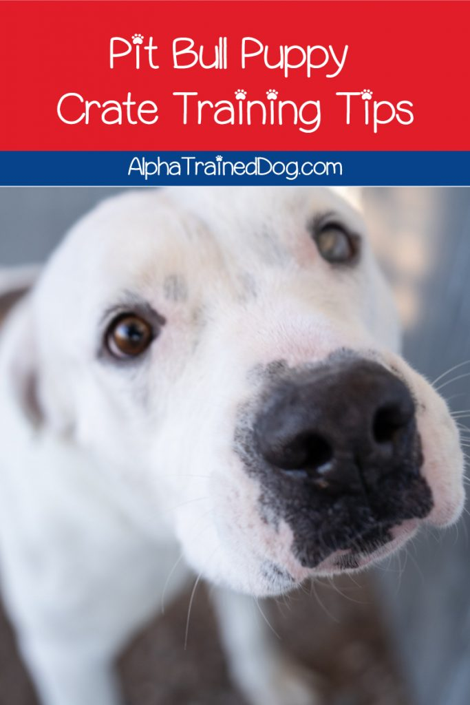 Looking for tips on how to crate train a pit bull puppy? Read on for our guide on choosing, setting up, and getting your pit used to his crate!
