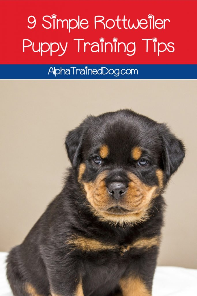 Looking for some training strategies and in Rottweiler puppy training? Check out our top 9 tips that will teach your Rottie pup good manners & more!