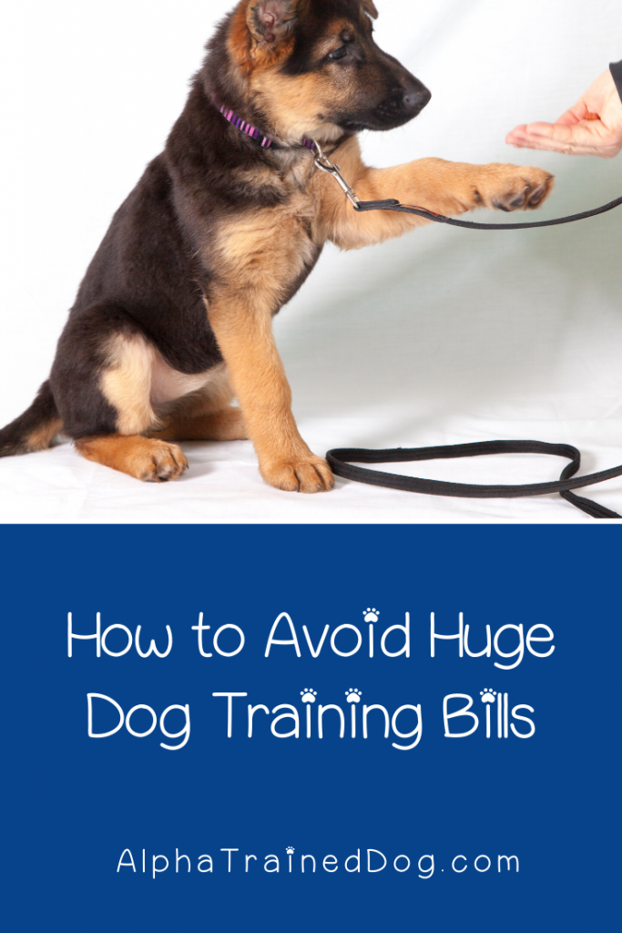 Want to know how to save money on dog training bills? Check out some super easy tips that will help you keep cash in your pocket while training your pup!