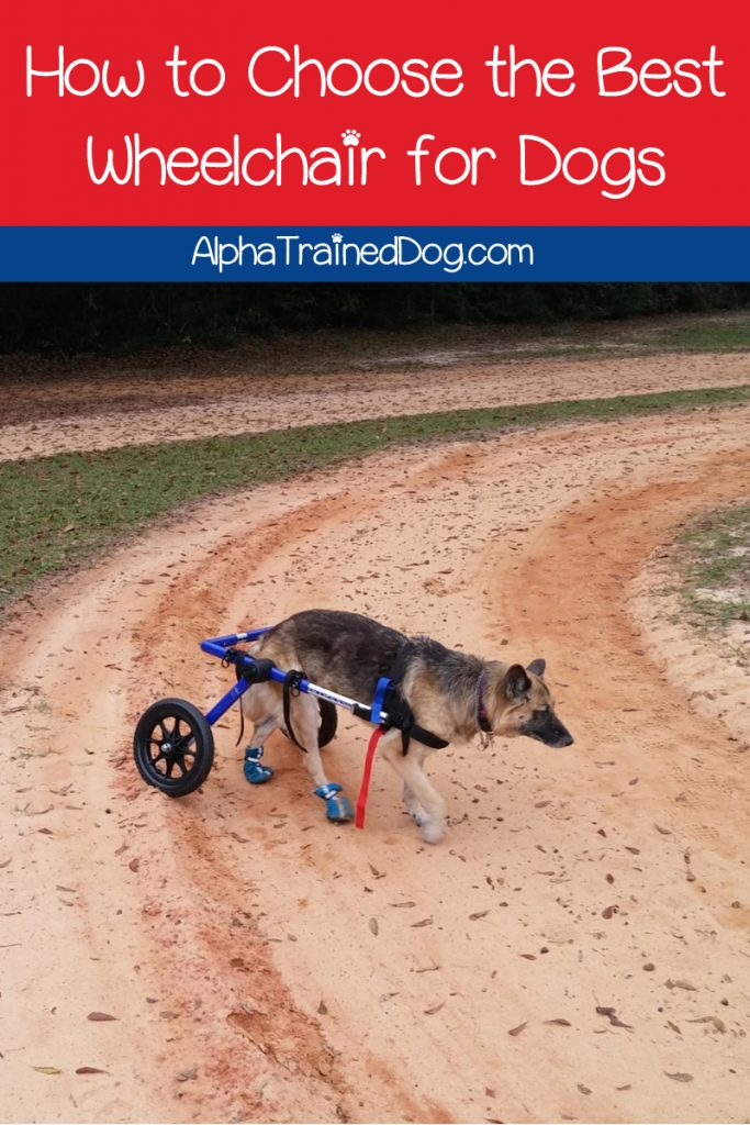 Finding the best wheels for dogs with bad legs can totally change your disabled pal's life. Take a look at our most highly recommended dog wheelchairs.