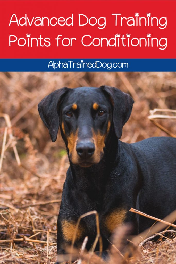 If you're using a dog training collar and want to switch to a regular one, you'll want to check out these tips on advanced conditioning!