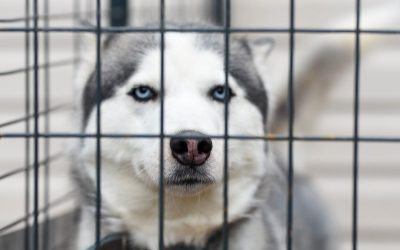 Dog Kennel Training Tips for Success