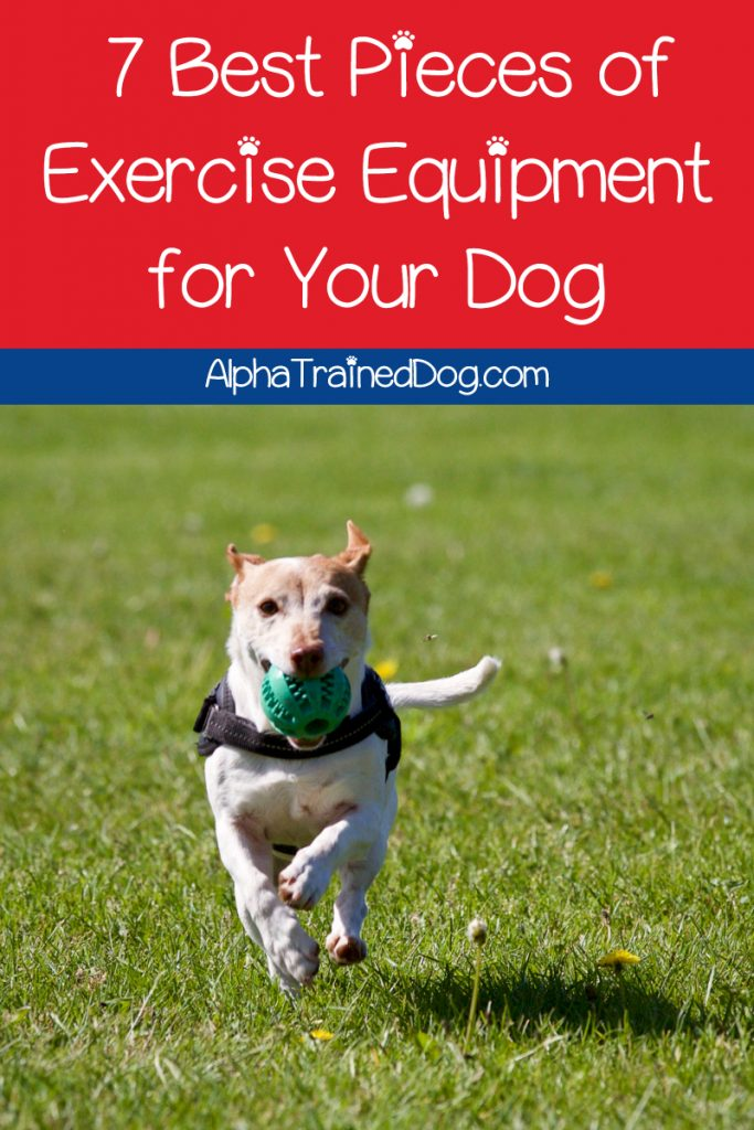 Keep Fido fit even when you can't take him for his regular walk with these top 7 best pieces of exercise equipment for dogs! Check them out!