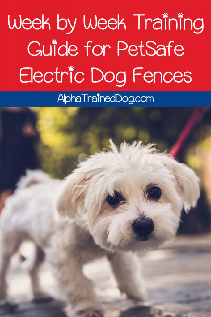 Before training your dog using a PetSafe Electric Dog Fence, you'll need to keep a few important things in mind. Read on for our week by week guide.