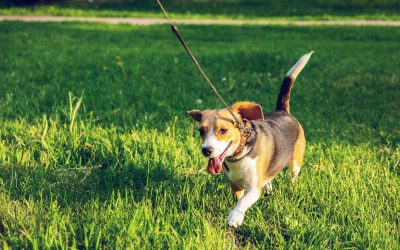 Training Your Dog using a PetSafe Electric Dog Fence