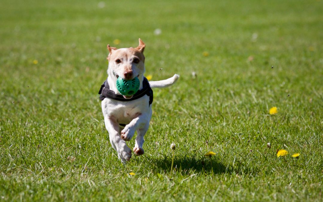 The 7 Best Pieces of Exercise Equipment for Dogs