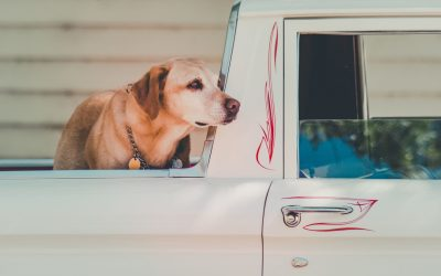 The 6 Best Dog Kennels For Truck Beds