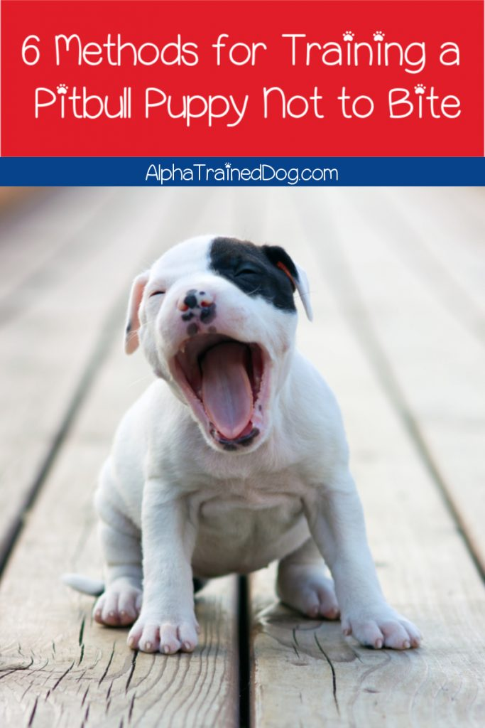 6 Essential Tips On How To Train A Pitbull Puppy Not To Bite