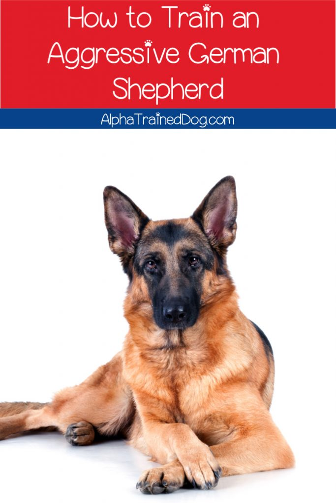 Are you wondering how to train an aggressive German Shepherd? Fortunately, I've got your back with 8 tips to help you deal with it the right way.