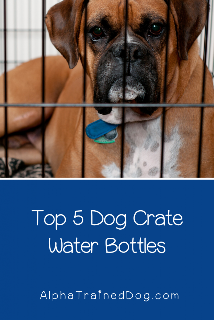 Looking for the best dog crate water bottles? Wondering what else to put in a crate? Check out the answers to both!