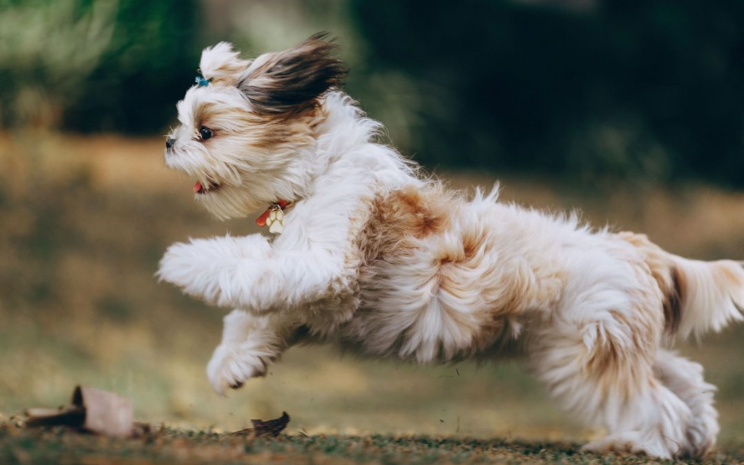 Best Dog Running Equipment to Take on Your Adventures