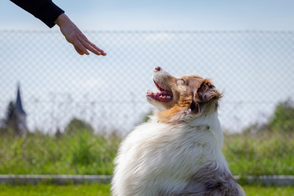 Dog training videos are the next best thing to having a professional come to your house. Just make sure you choose the right ones. Check out 5 we love!