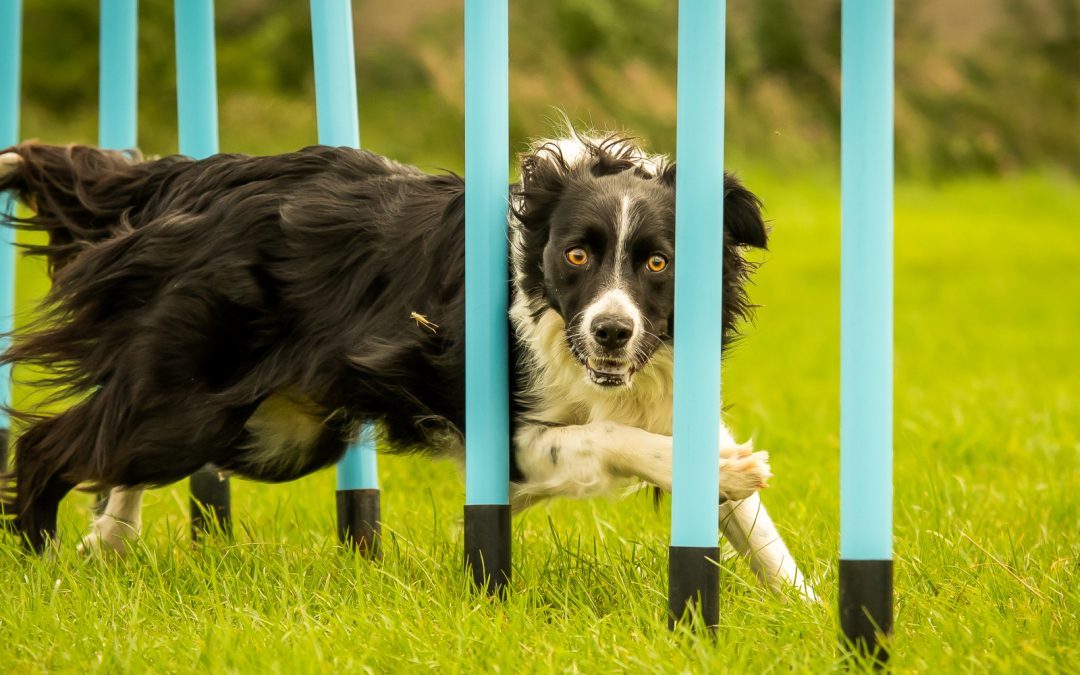5 Must-See Dog Training Videos That Will Simplify Your Life