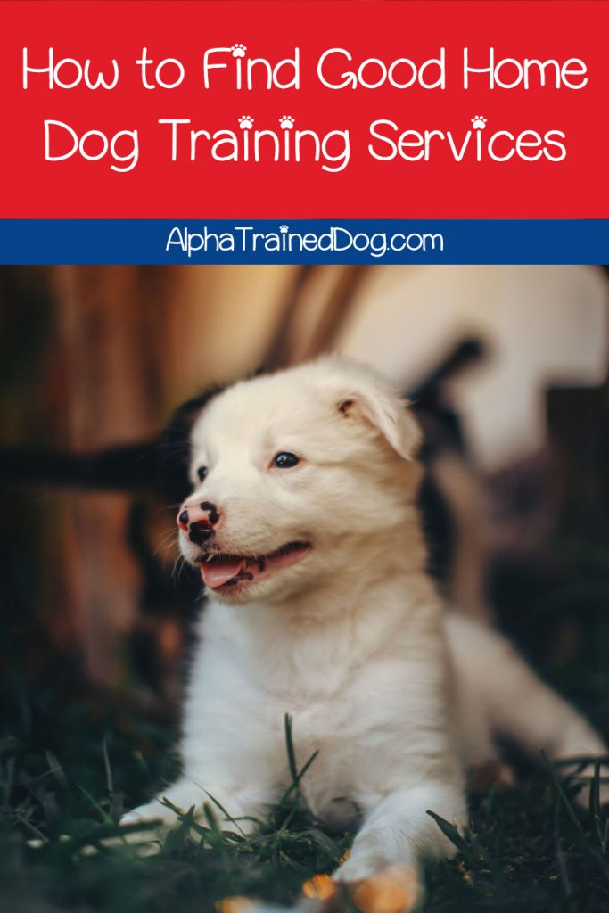 Wondering how to find good home dog training services? From in-home trainers to virtual options, we've got you covered. Take a look!