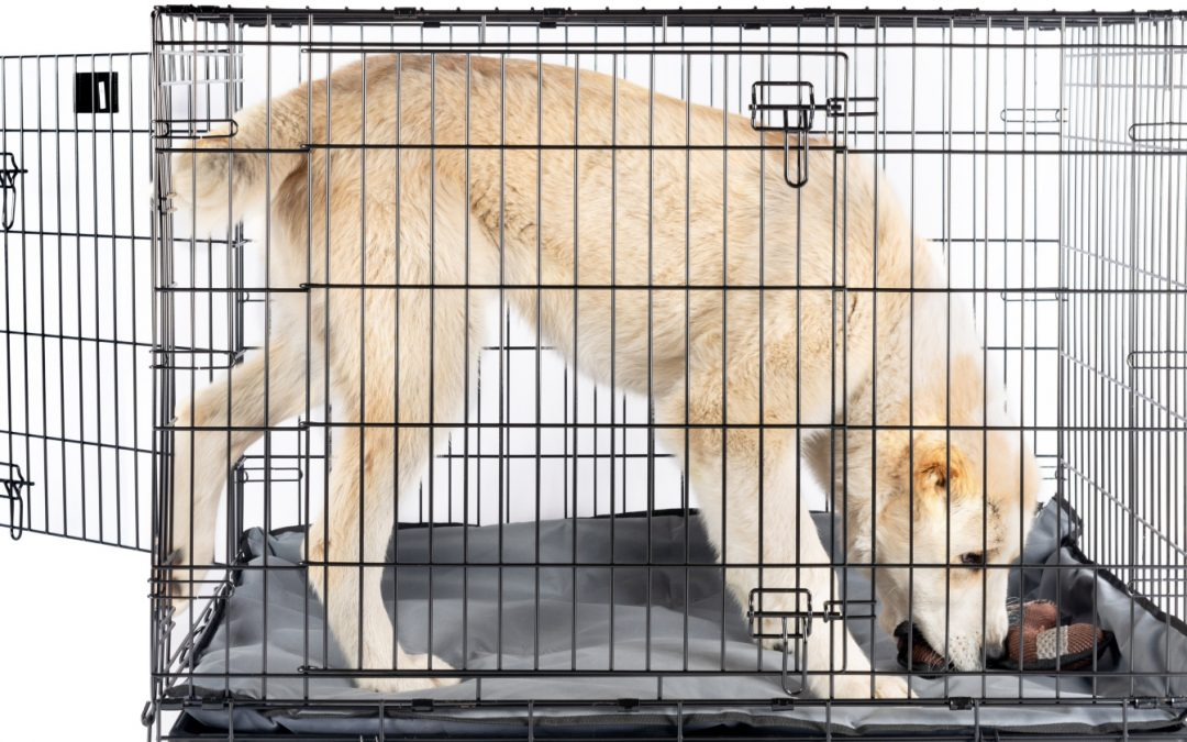 3-Door Dog Crates: Why You'd Want Them & Which Ones to Buy