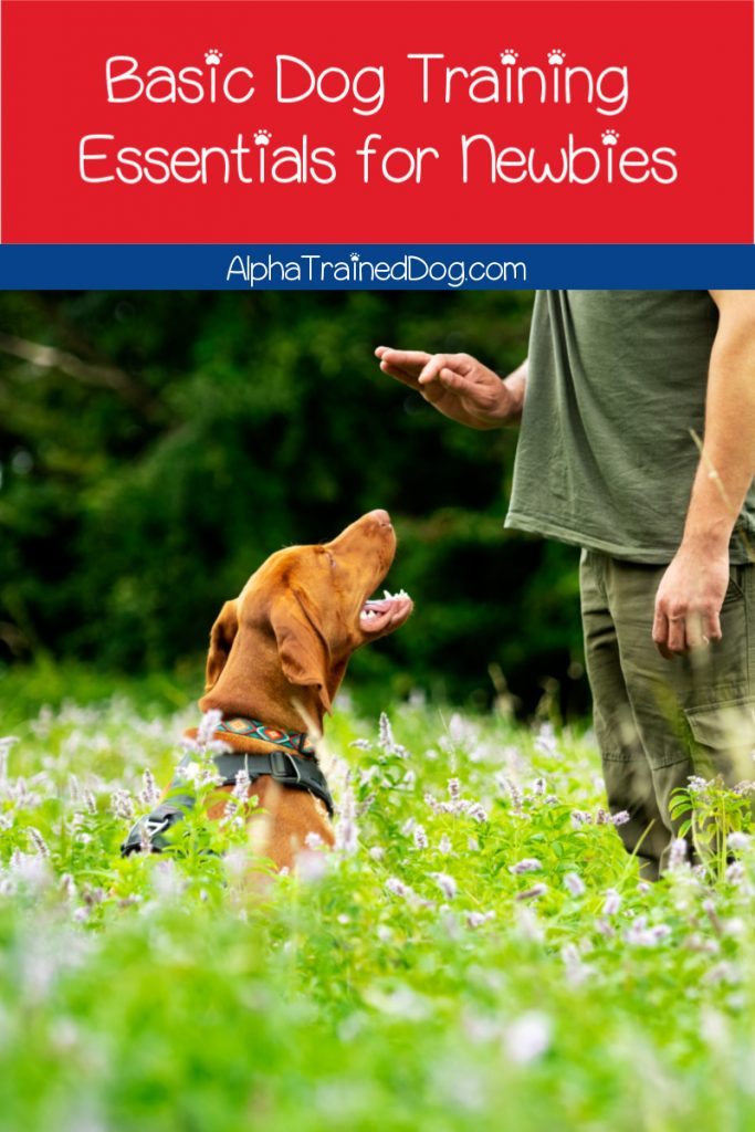 If you're looking for the absolute essential and most basic dog training tips for beginners, you're in the right place. Take a look!