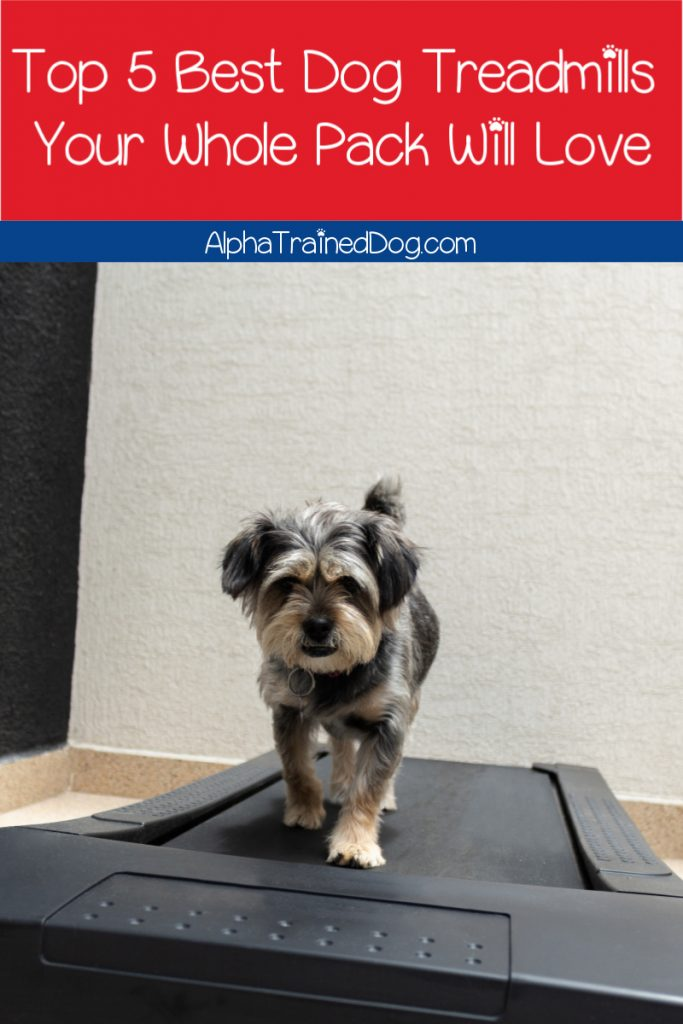 If you're looking for the best dog treadmills for the whole pack, stick around! We'll go over your top 5 options that are just right for multiple pooches!