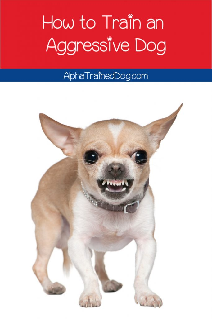 Need some tips on how to train aggressive dogs? Find out what to do- and what not to do- to help your pup lose his aggression.