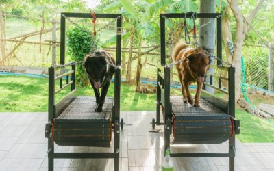 "Top 3 Benefits of Treadmill Training for Dogs (+3 ""Watch Outs"" You Can't Miss)"