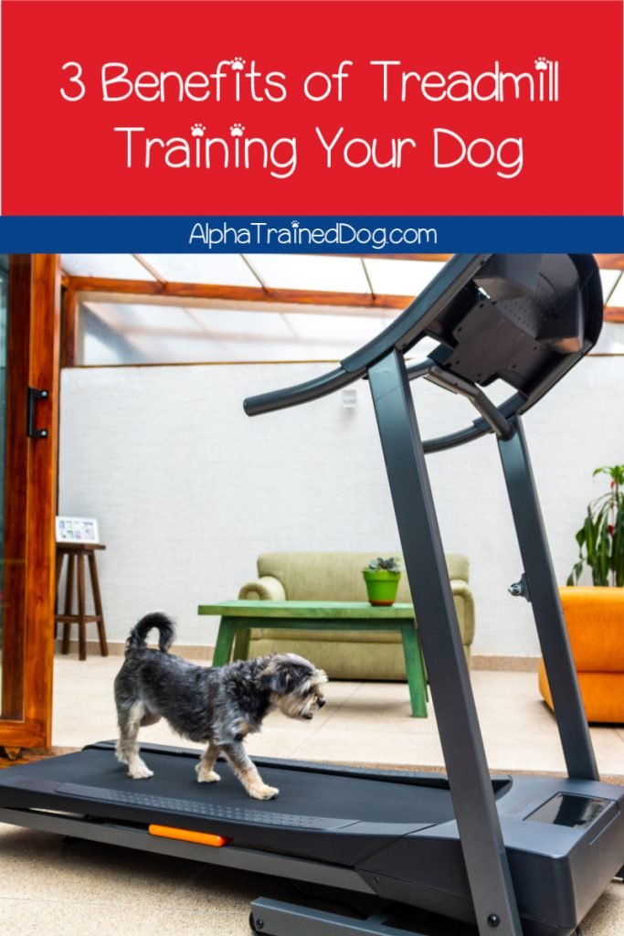 Thinking of getting a dog treadmill but worry it's not worth the cost? These benefits of treadmill training for dogs may sway you! Take a look!