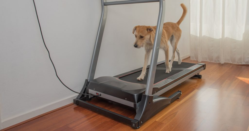 These dog treadmill training tips will help you get your dog on his new device. Our tips feature 3 approaches to match your style.