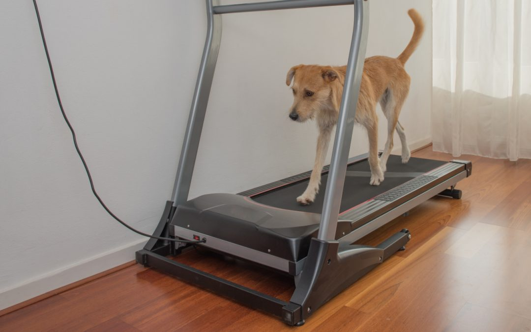 Dog Treadmill Training Tips: 3 Genius Approaches to Match Your Style