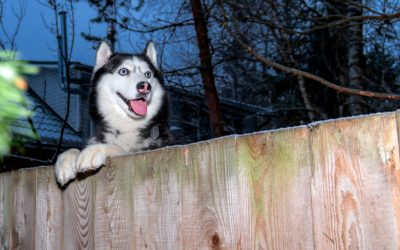 Top 3 Best Dog Fences for Huskies (With Full Reviews)