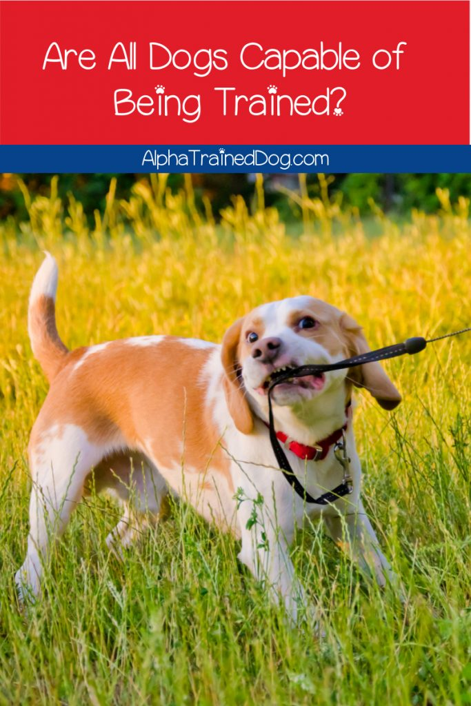 Can all dogs be trained? Even super stubborn breeds? The answer may surprise you! Read on to learn what it is, plus get tips to make your job easier.