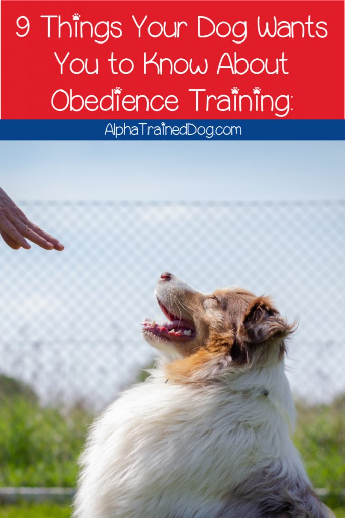 Before you even think about starting your dog obedience training, read on for these 9 things your pup really wants you to know.
