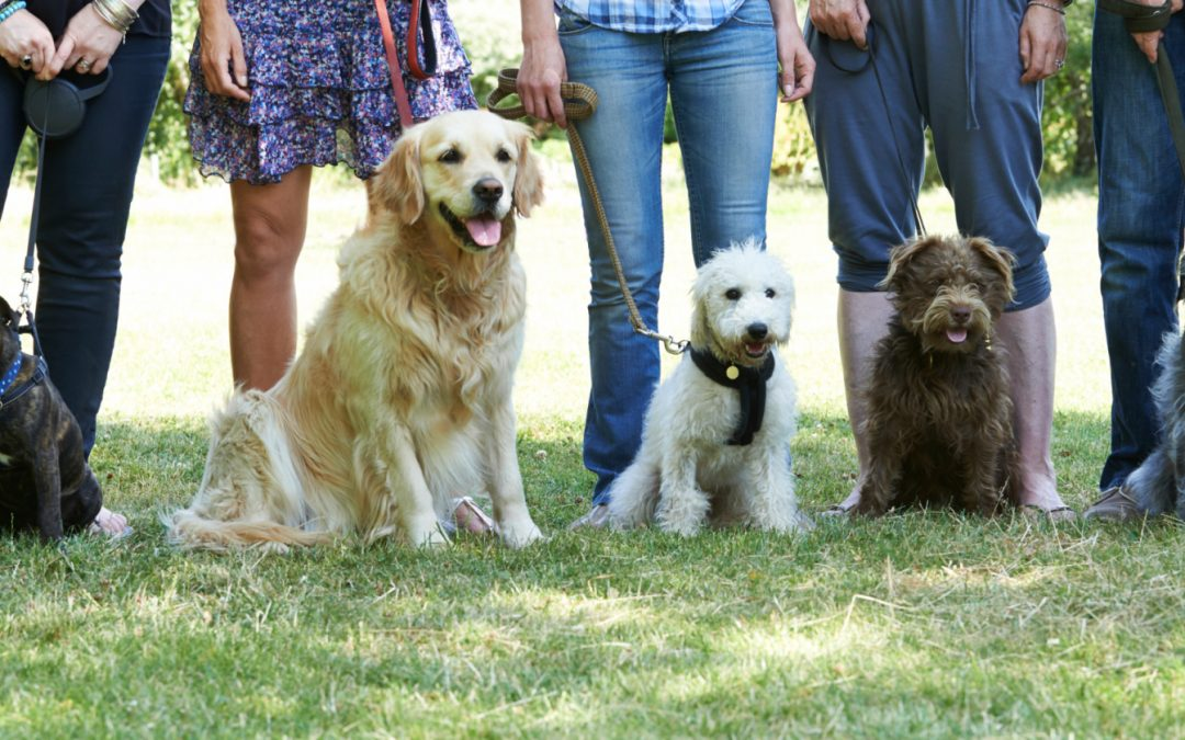 Dog Training Classes Vs. Private Dog Training Lessons Vs. Doggie Boot Camps