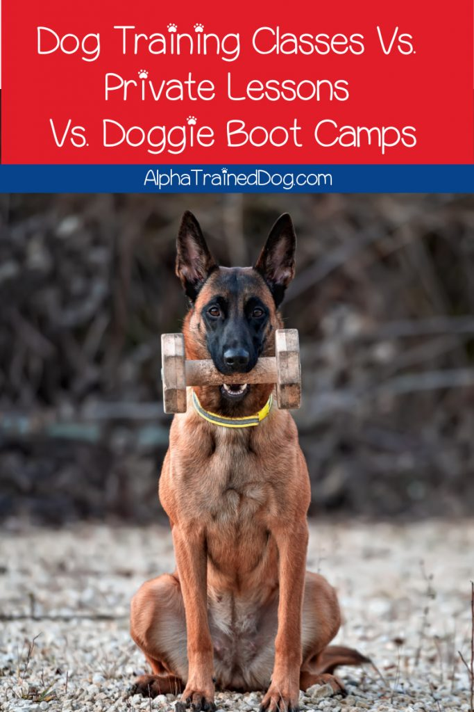 What is the difference between dog training classes, private home training, and doggie boot camp? Read on to learn about each one and decide which is best for your pup!