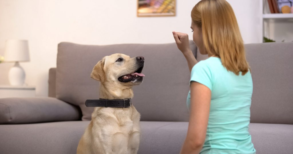 Are you wondering how much in-home dog training cost? Curious about the pros and cons? We've got you covered! Check out our guide for the answers!