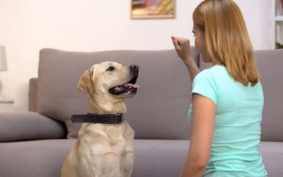 How Much Does In-Home Dog Training Cost?