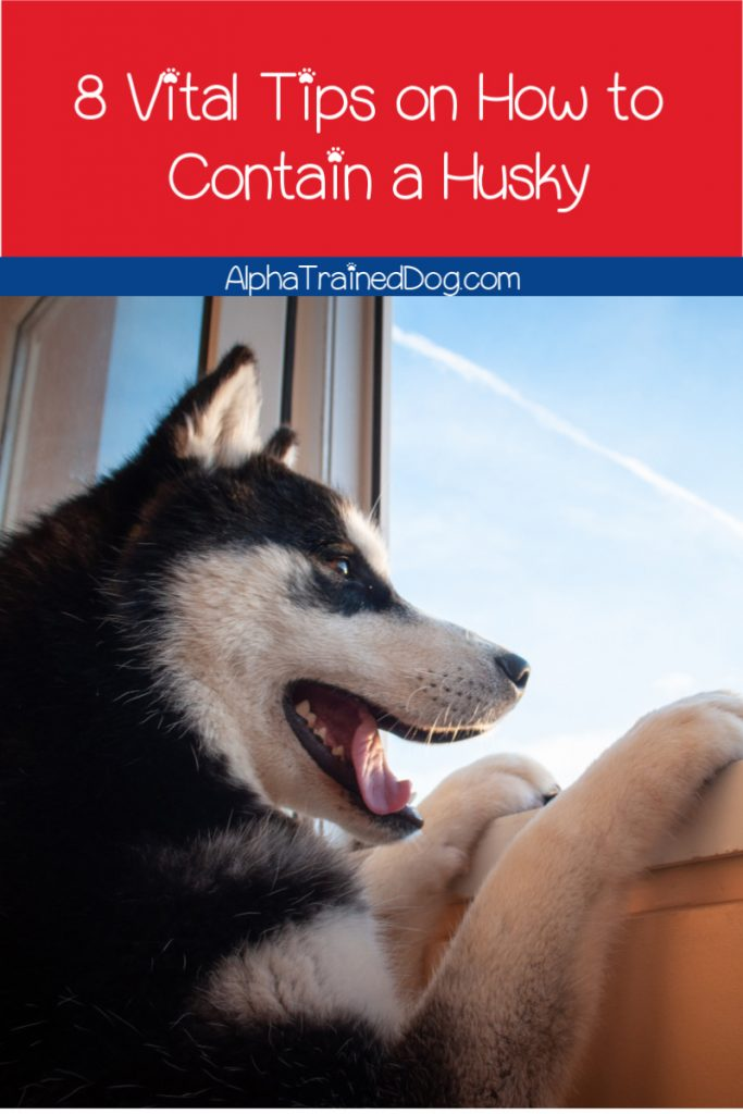Need to know how to contain a husky fast to keep your pup from escaping? Take a look at these eight must-know training tips!