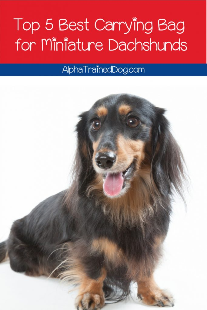 If you're searching for the best miniature dachshund carry bag, we've got you covered! Read on for our top five picks, with complete reviews!
