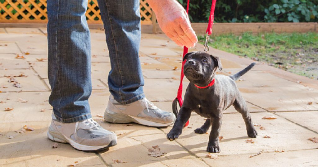 These Pitbull obedience training tips will help you properly train your pooch. Don't worry, it's easy when you know how to approach it.