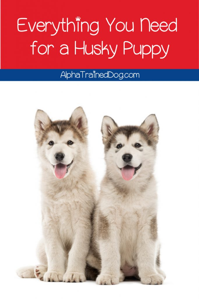 Wondering what sort of things you need for a husky puppy? Follow our guide to get all of the necessities before bringing your new pal home!