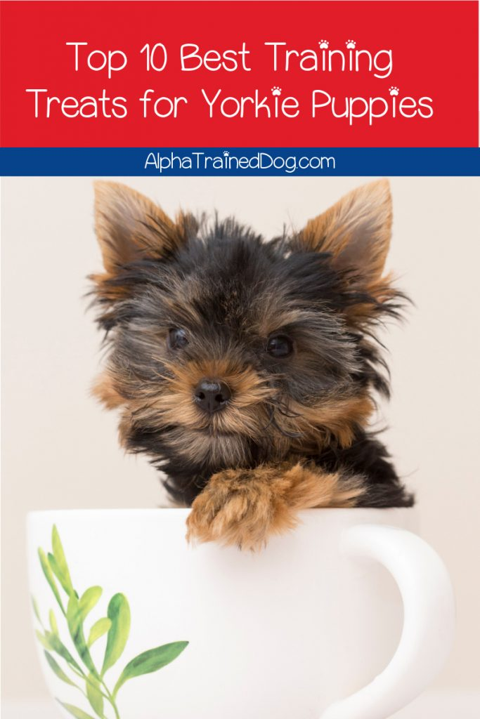 Keeping training treats for Yorkie puppies on hand will make all of your training tasks infinitely easier. Check our our favorites!