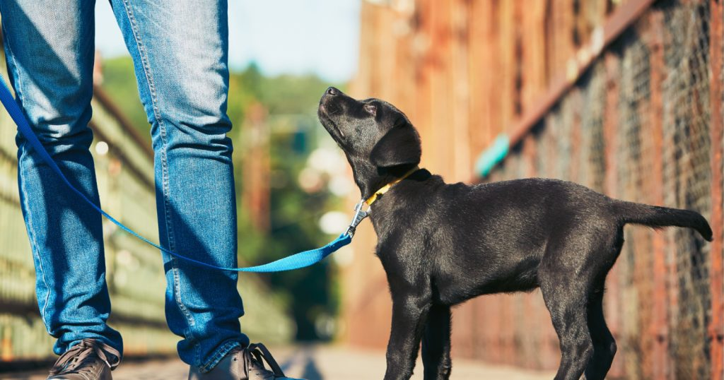Knowing when to start puppy training classes will help you raise a more well-behaved dog. Learn the answer, plus find out where to go for them!