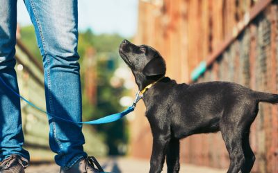 Puppy Training Classes – When, Where, and Why to Take Them