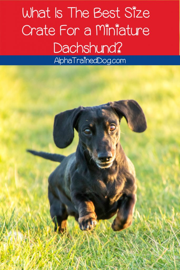 What is the best size crate for miniature dachshund? Read on to find out the answer, plus check out 5 of the best mini Doxie crates!