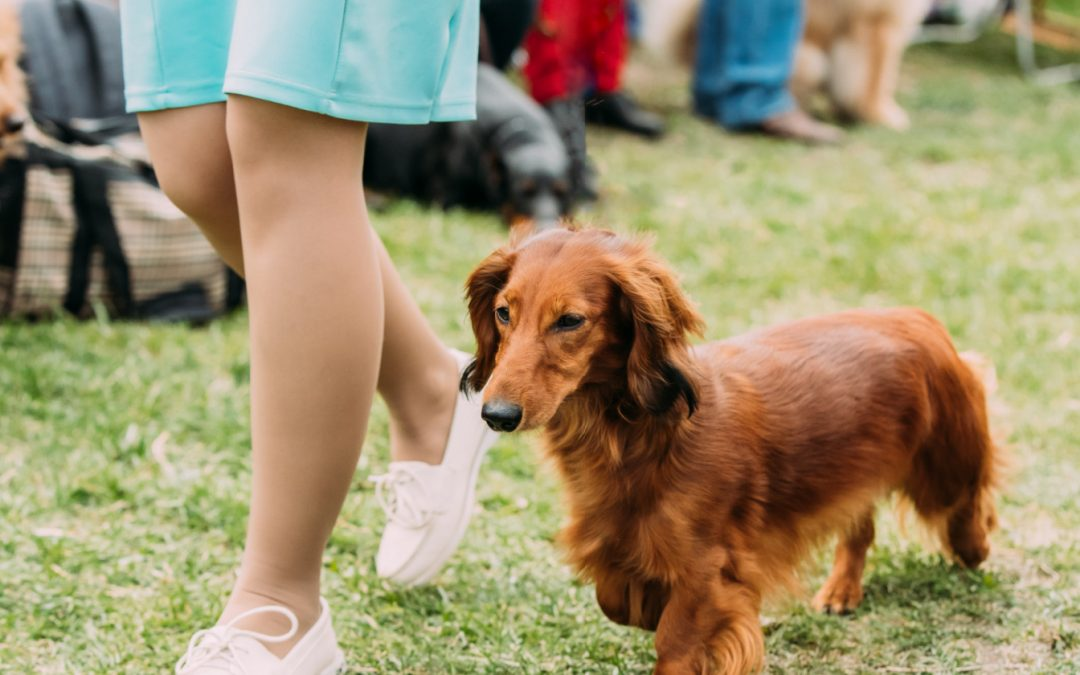 Top 7 Best Dachshund Training Books to Read Right Now