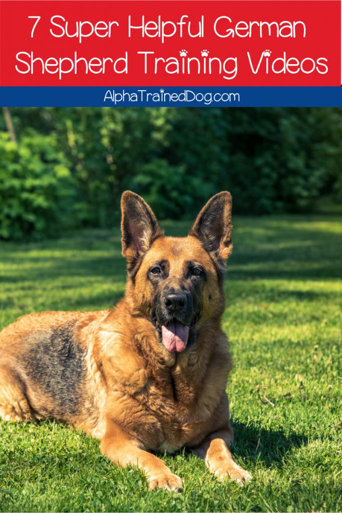 With so many German Shepherd training videos, it's hard to know which are worth your time. We did the hard part and picked the top 7! Check them out!