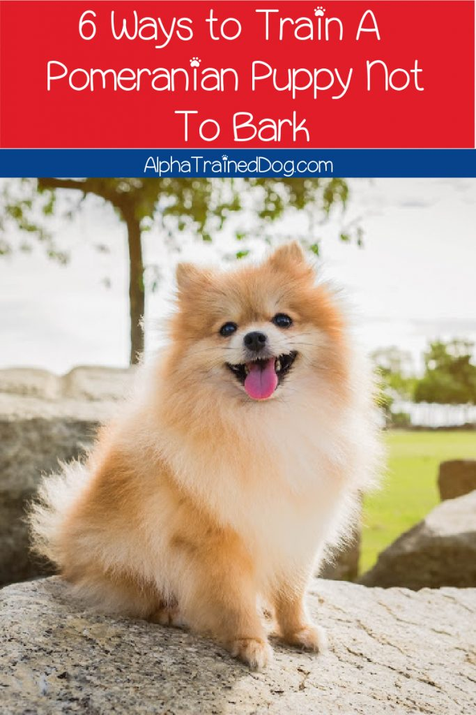 Wondering how to train a Pomeranian puppy not to bark? Check out our ultimate guide with six tried and true methods!