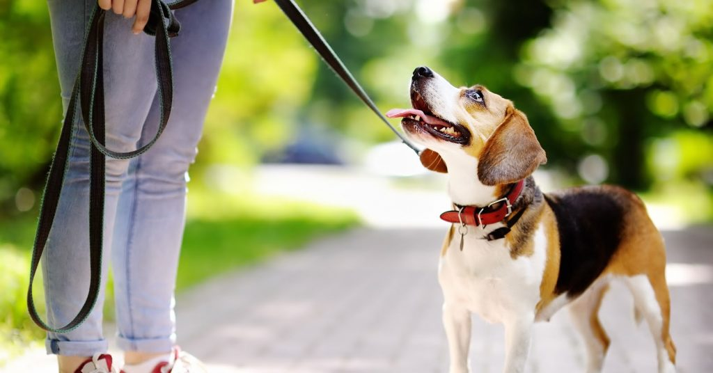 Virtual dog training vs in-person dog training: which one is more effective? Read on for our complete comparison to find out!