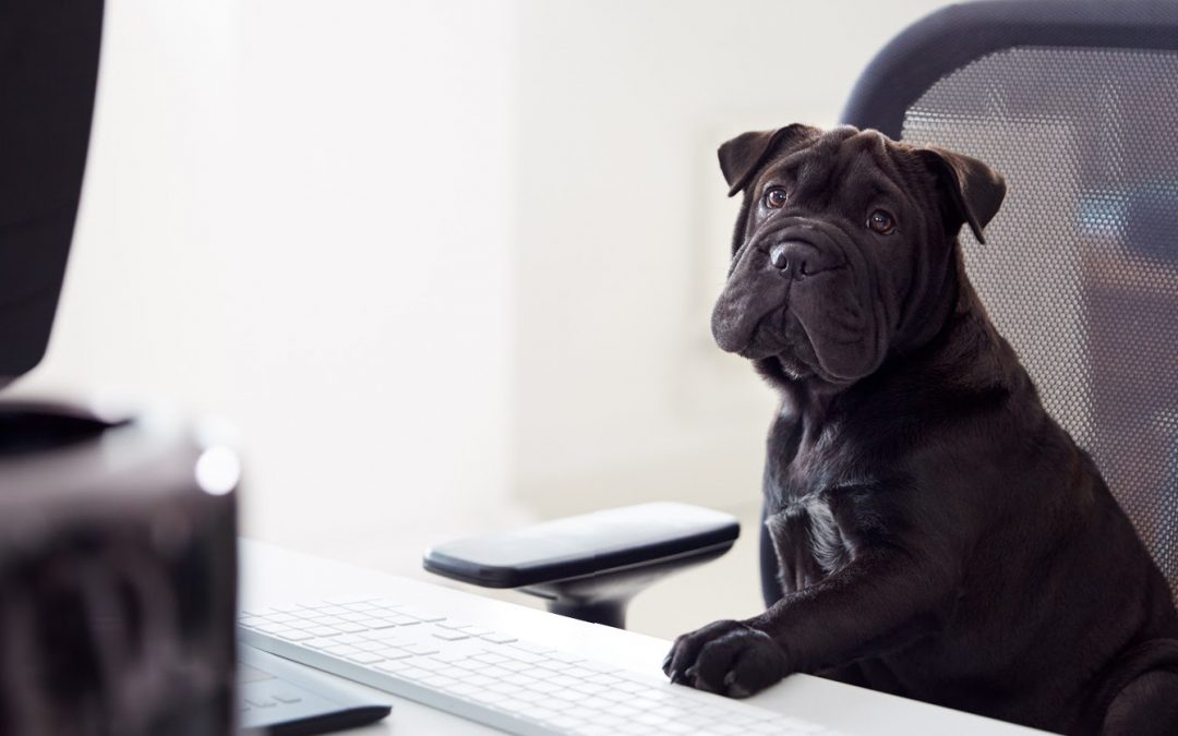 Virtual Dog Training Vs. In-Person Training: Which is More Effective?