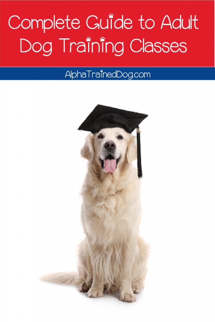 Adult dog training classes can help you teach your dog to be the best boy. You'll find resources here on classes for older dogs.