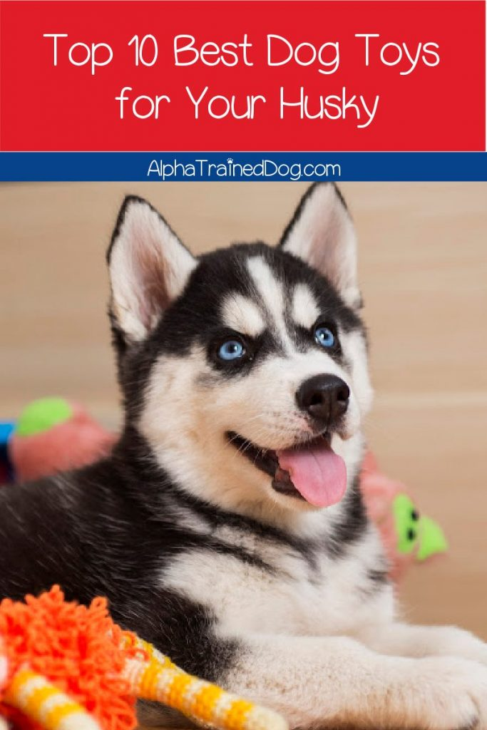 Looking for the best dog toys for Huskies? Check out 10 great options, with toys that stimulate his mind as well as his mouth!